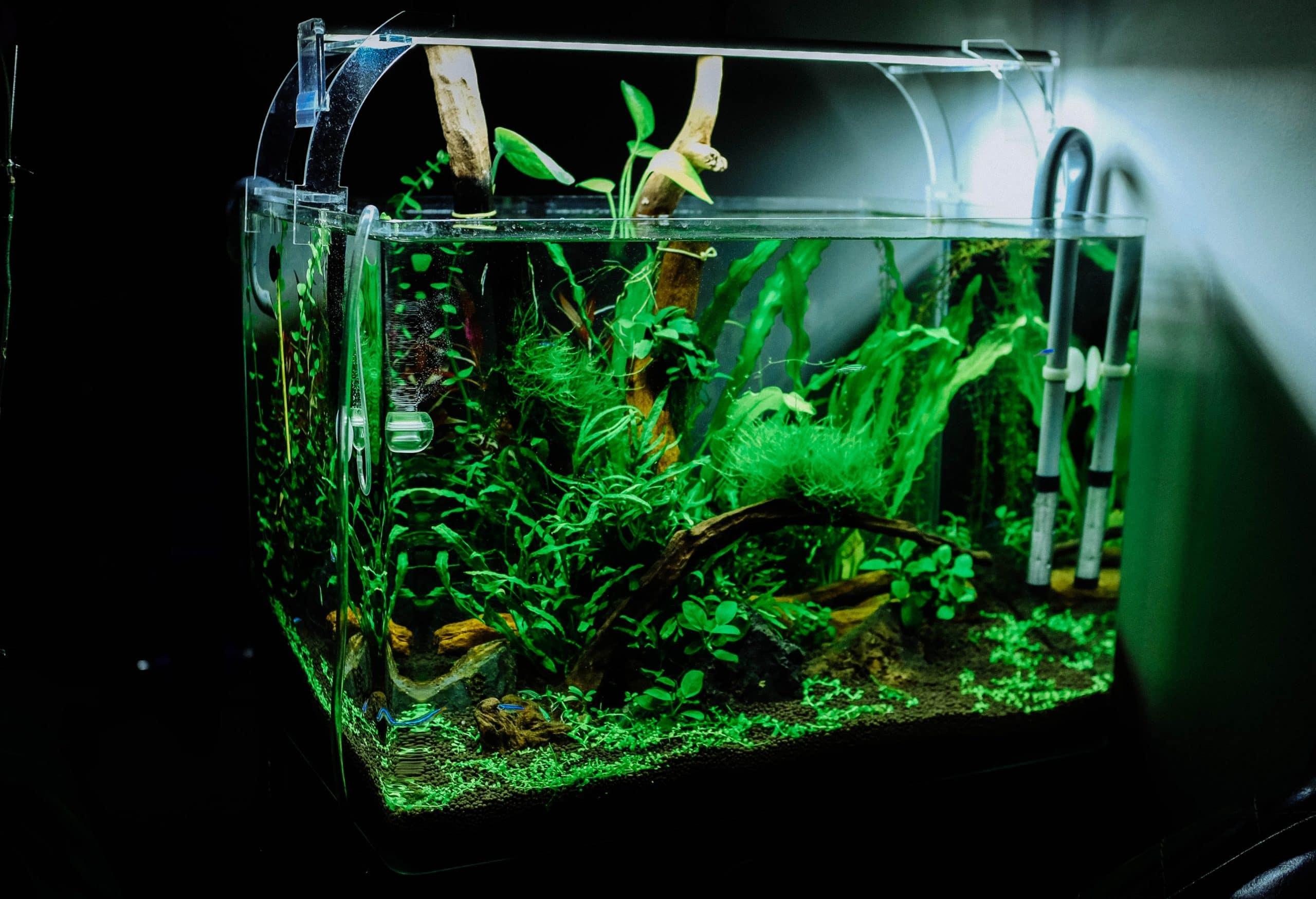 Aquarium osmoseur